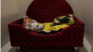 hotel-india-lusso-cani
