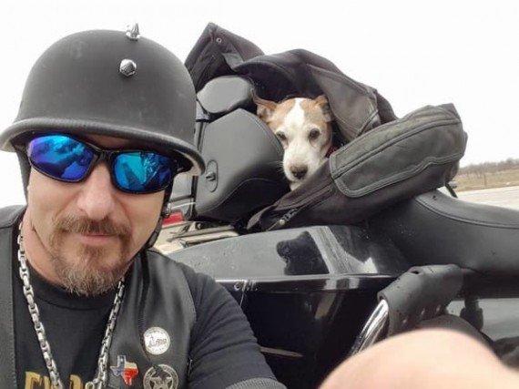 02-mr-davidson-biker-dog