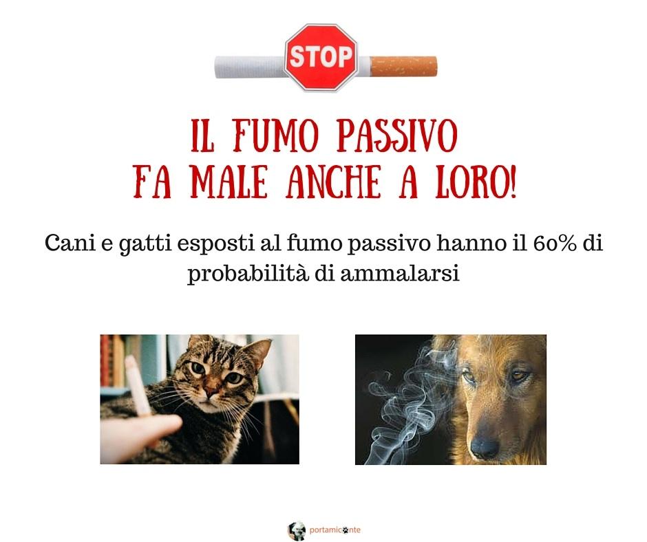 Il fumo passivo fa male al cane e al gatto. Come fare?