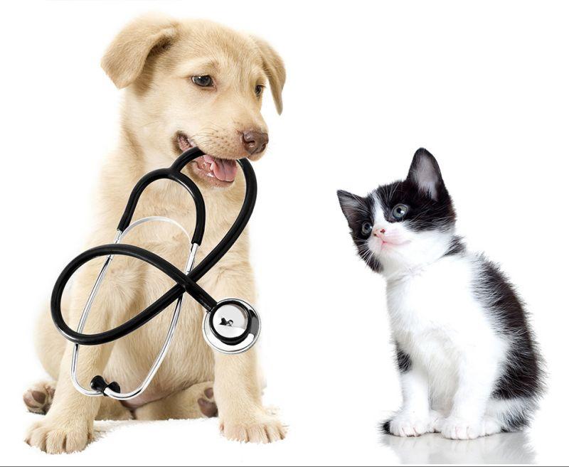 permesso-lavoro-cura-cane