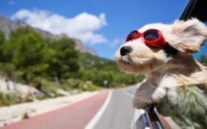 occhialini-cane