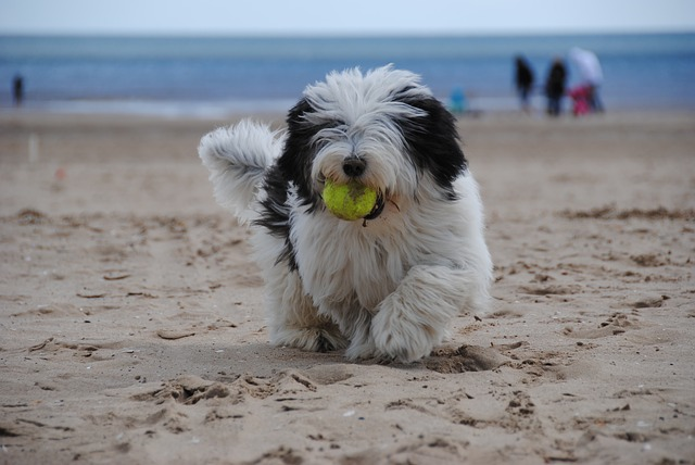 spiagge-vietate-cani
