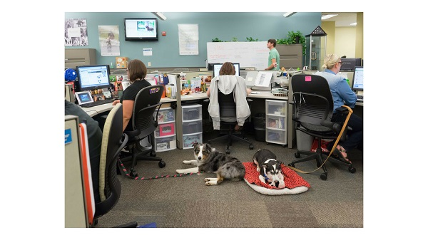 dog-at-work