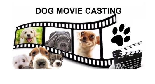 dog-movie-casting
