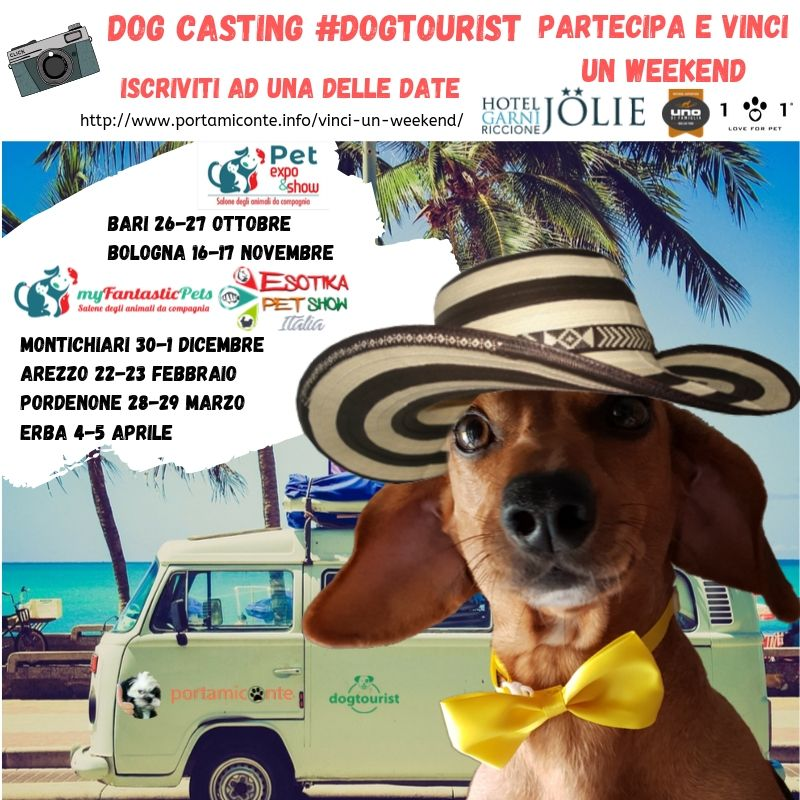dog-casting-vinci-un-weekend