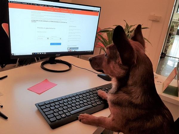 cani-ufficio