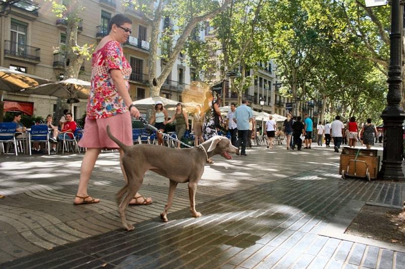 vacanza-spagna-cane